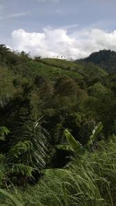 track ke Baduy Dalam, di lihat dari seberang jembatan bambu